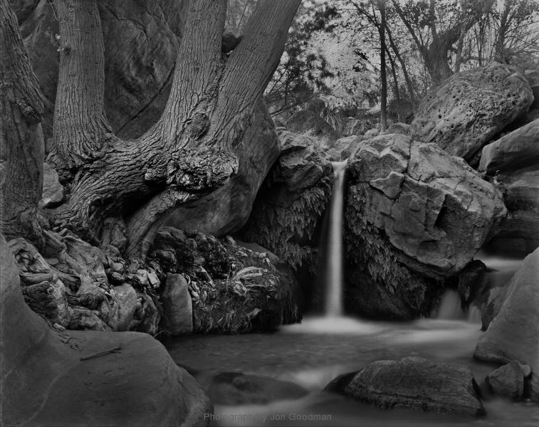 Patio waterfall & cottonwood 12_in 2 lwr hi 10_8_14