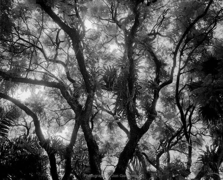 Backlit Trees Carbon neg 1_30_14