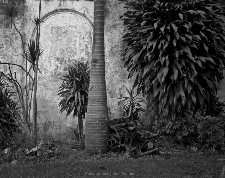 Palm & wall