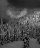 Forest & Clouds, Winterland